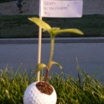 Golf Ball flower pot - Edison